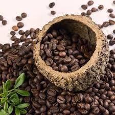 кофе зернах гватемала антигуа