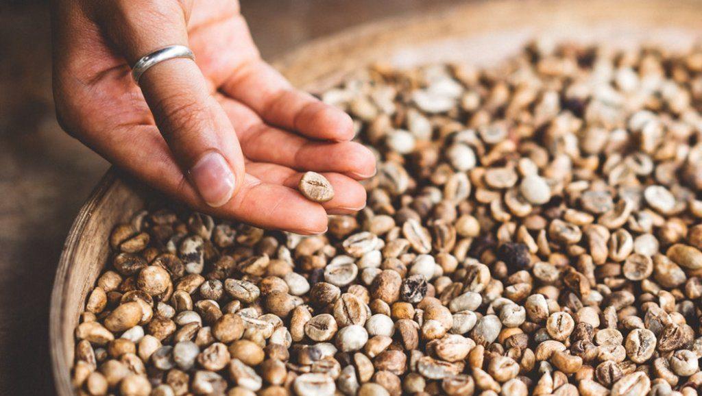 Регионы выращивания кофе
